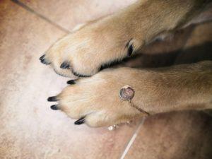 Педикюр для собак