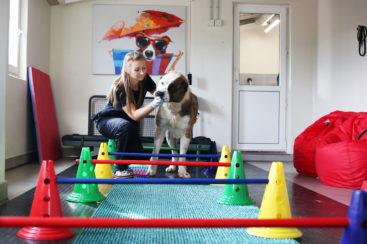 Центр реабилитации животных