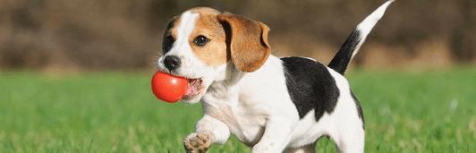 У животных режутся зубы