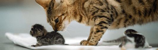 Кормление потомства